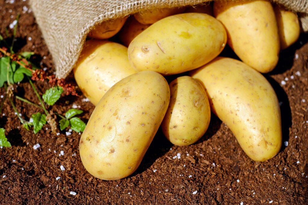 kentang untuk masker organik