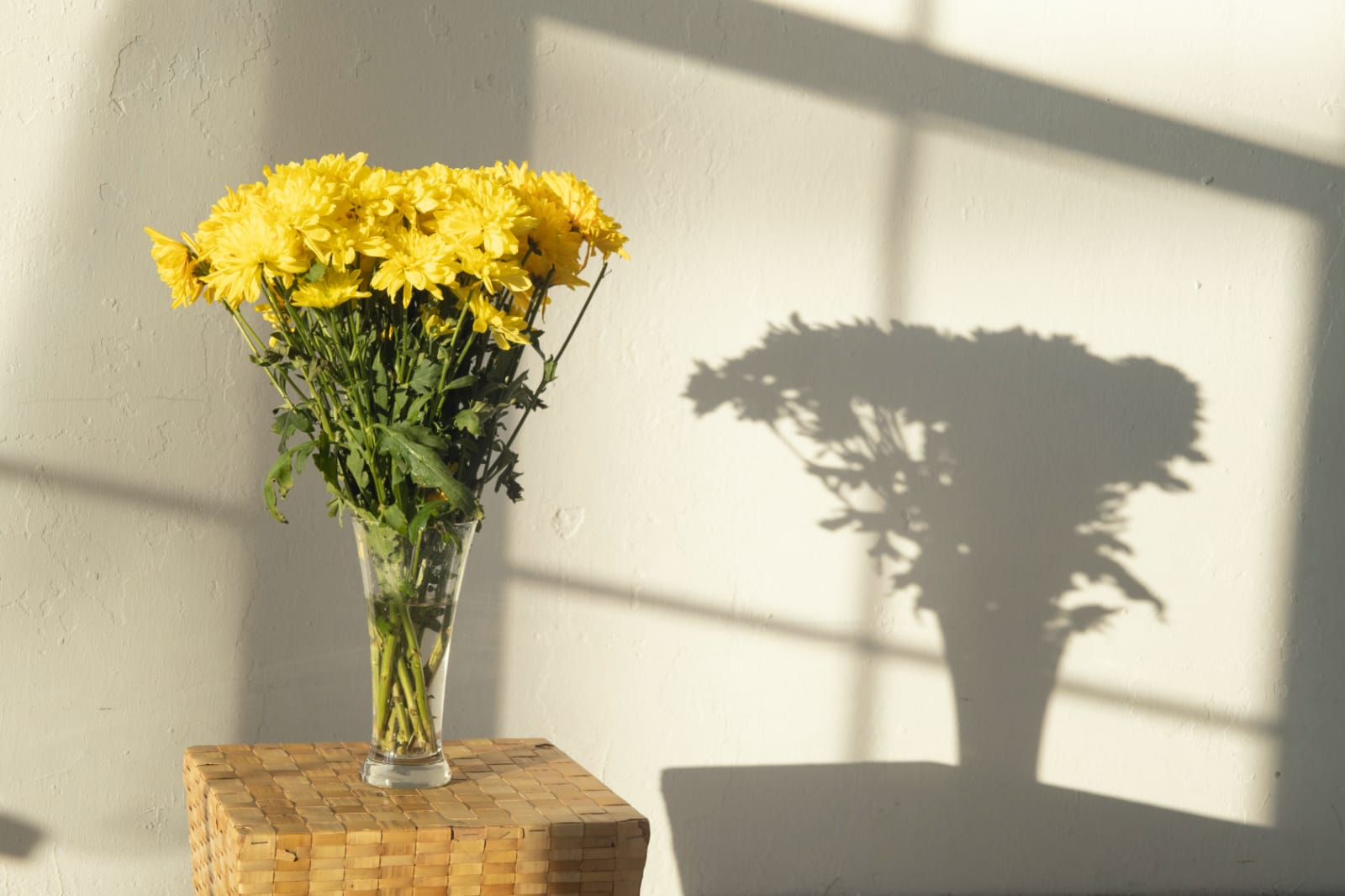 Manfaat-bunga-krisan-untuk-kecantikan-1