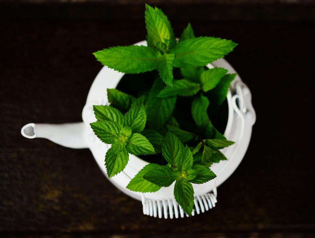 jenis teh untuk kecantikan (