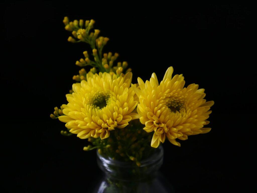 manfaat bunga krisan untuk kulit